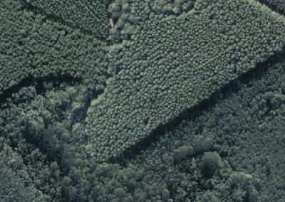 Aerofotogrametria - Ortofoto - Silvicultura