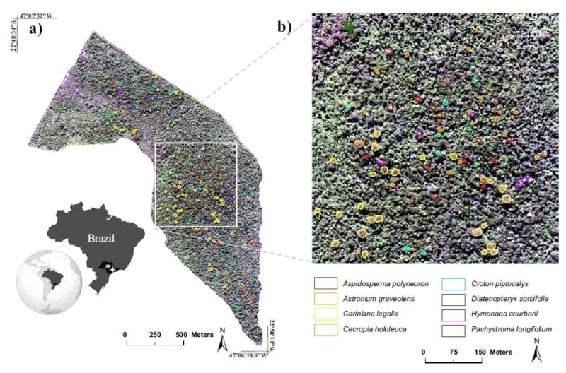 Árvores da Mata Atlântica são mapeadas com sensoriamento remoto