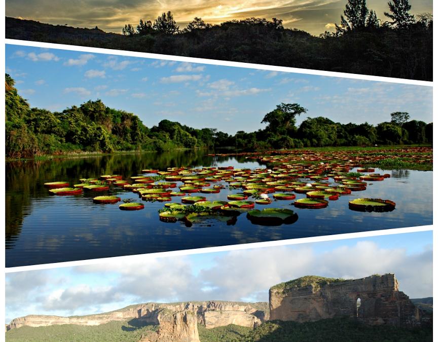 A pluralidade da preservação dos biomas brasileiros