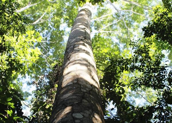 Recuperar áreas degradadas gera lucro e preservação ambiental na Amazônia
