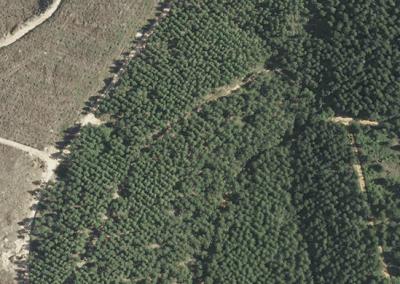 Silvicultura - Foto aérea - GSD de 10 cm - Telêmaco Borba, PR