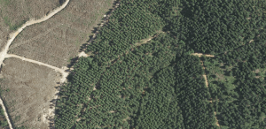 Sivicultura