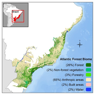 Pesquisa indica restar mais Mata Atlântica do que se pensava